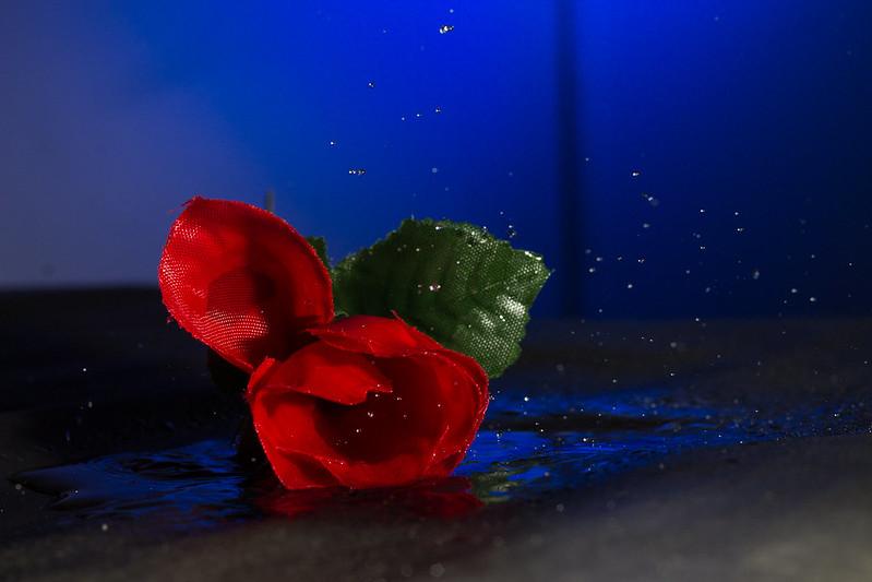 Falling (fake) rose