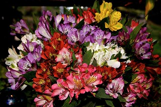 Weekly Photo 14/52 for 2013: Birthday Bouquet by Kristen Koster on Flickr