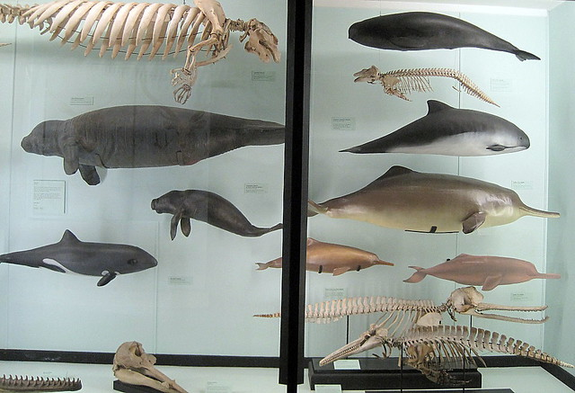 Display case, Tring Natural History Museum