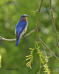 nightingale(0.0), finch(0.0), jay(0.0), animal(1.0), branch(1.0), fauna(1.0), indigo bunting(1.0), bluebird(1.0), beak(1.0), bird(1.0), wildlife(1.0),