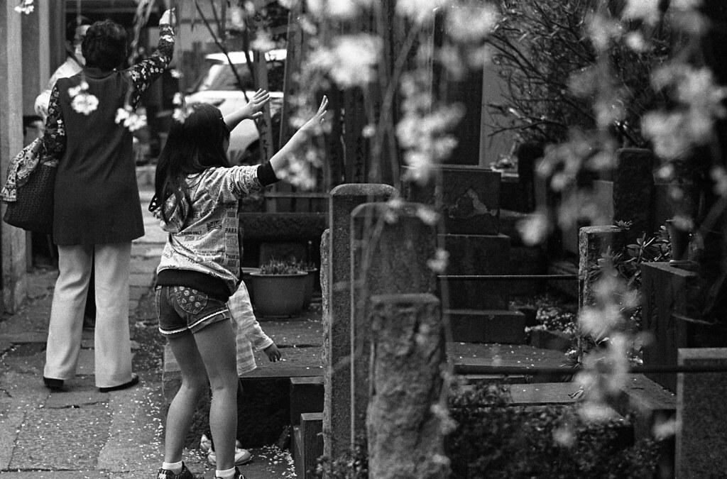 桜の下で踊る少女