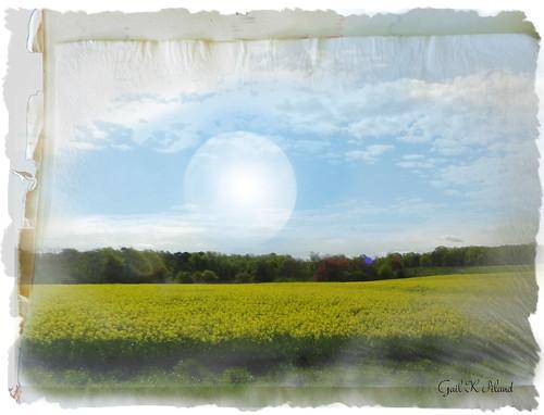 yellow landscape photo soe textured canola thegalaxy theunforgettablepictures theperfectphotographer thebestofday gailpiland ringexcellence rememberthatmomentlevel1 rememberthatmomentl1