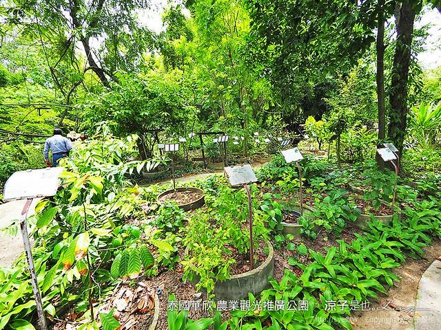 泰國華欣 農業觀光推廣公園 10