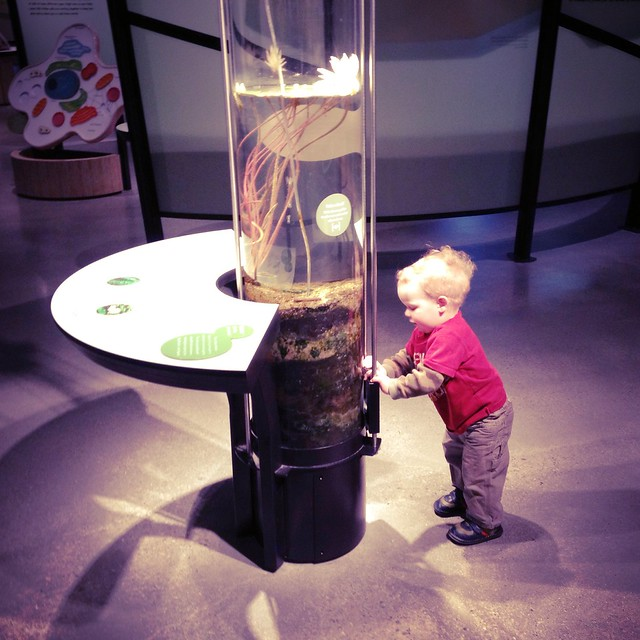 Lewis exploring at the Natural History Museum