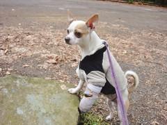 Beaker posing at the park
