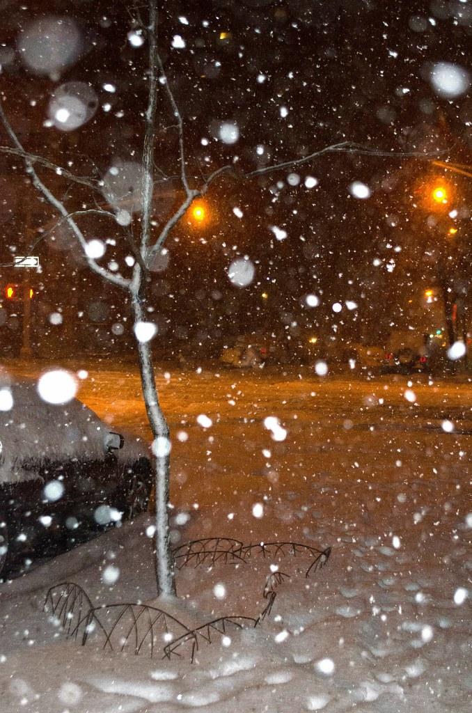 snow and stars-DSC_2460.jpg