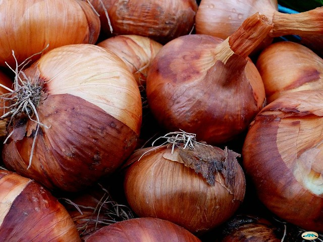 Cebollas de Cuntis