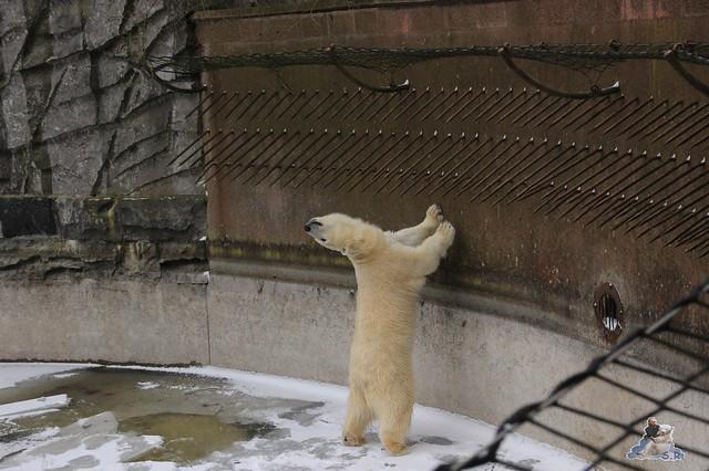 aber wo ich auch gucke, immer ist das Eis nicht dick genug