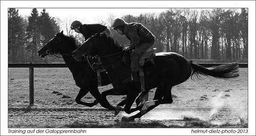 Galopper Training auf der Rennbahn - Rennstall Wöhler, Gütersloh, Photo: Helmut Dietz, Windhundzeitung.de, Bielefeld