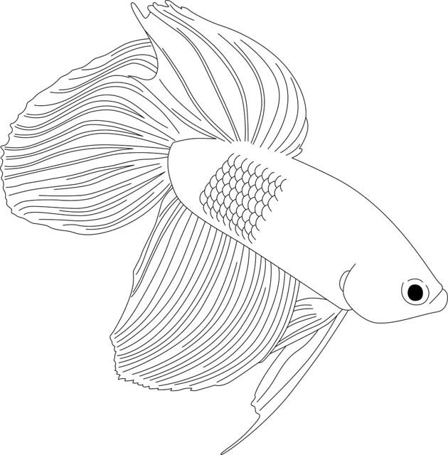 flickr  rabblefish