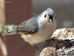 animal, sparrow, wing, fauna, emberizidae, beak, bird, wildlife,