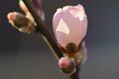 Spring Messenger III