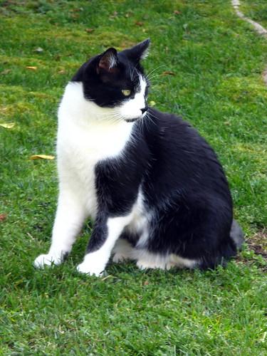 Charlie Cat 2 1:2 yrs. 01