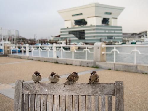 Sparrows, Yokohama by KaraNagai