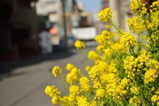 Spring at the street corner.