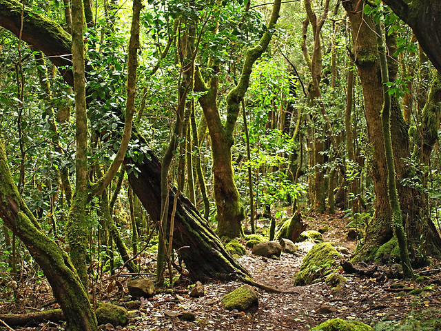 Rainforest, La Gomera