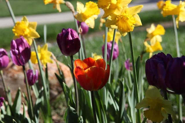spring flower_060