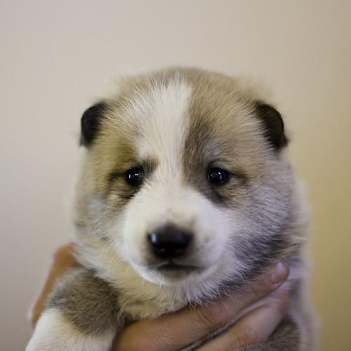 Ike-Kilbe-Pup2-Male(Day 22)-4