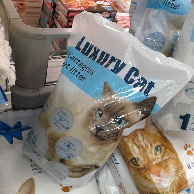 Luxury Cat cat litter, Iceland 2013
