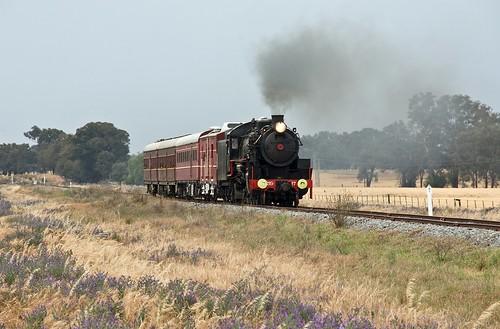 5917 approaching Koorawatha, Cowra Branch, NSW, 3rd November, 2007.