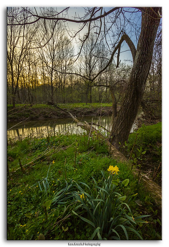 longexposure morning flower bulb river maryland westernrun huntvalley