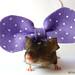 gros noeud violet