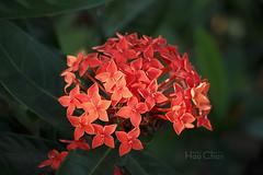 Fiery flowers