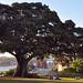 Picnic Under the Tree by Atilla2008