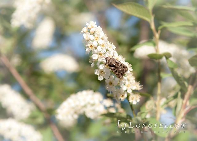Summer Moth 43/365