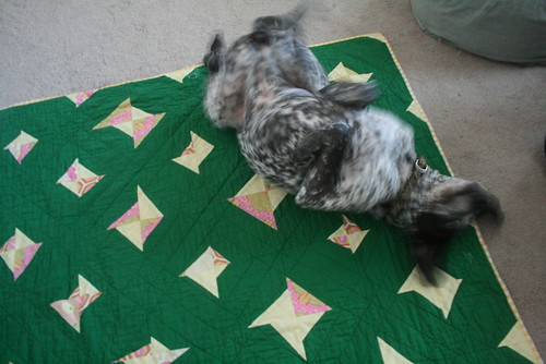 Misty Loving the Green Quilt