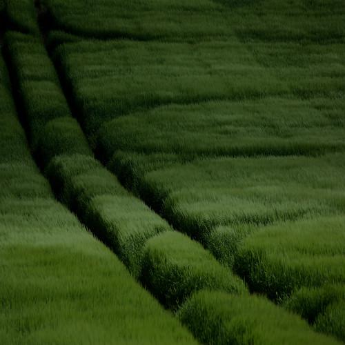 [フリー画像素材] 自然風景, 田園・農場, 緑色・グリーン ID:201302191200