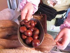 flushing chestnuts