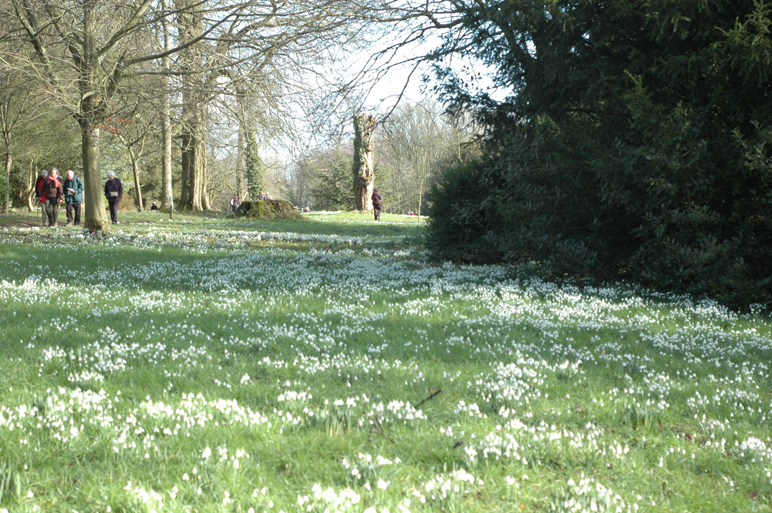 snowdrop walk - National Trust Newark Park, Glos