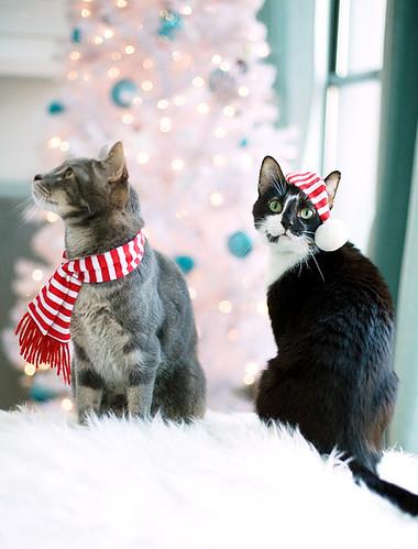 xmas-cats 4