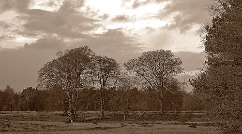 Clumber Park by birbee