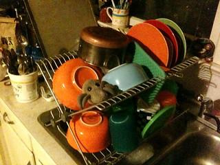 Dish-drainer mite