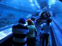 Bung Chawak Aquarium Suphanburi Province Central Thailand Zentralthailand