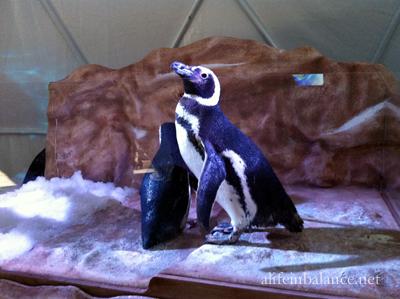 seaworld_orlando_penguin