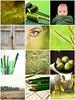 Mosaico de Click&Go: Verde by Leonor Saavedra