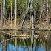 Reflections @ Powhatan Wildlife Mangement Area, Powhatan, VA