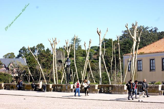 àrvoresVilade Sintra