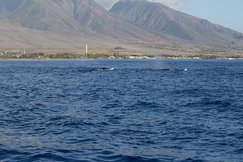 Maui Hawaii-27