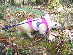 Pua in the woods