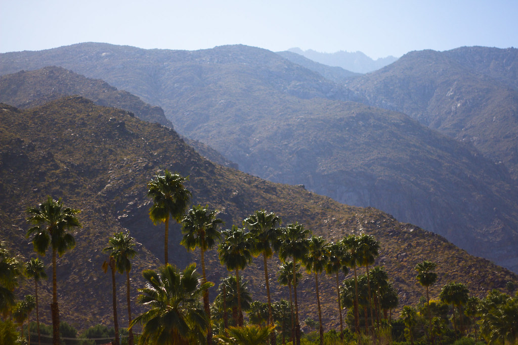 desert landscape of Palm Springs