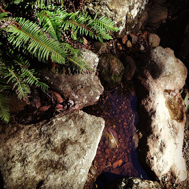 Autumn in Tasmania... Feeling grounded after some time in nature #bushwalk #tasmania #autumn #water #rock #fern #instatassie
