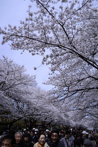 Tokyo 2013 (春) - お花見 - 上野 (6)