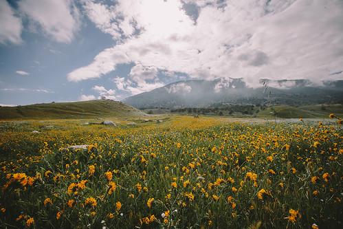 california sky cloud mountain flower nature canon lens landscape unitedstates 28 tehachapi 1635mm