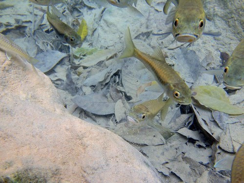 these fish wanted to eat the skin off of our feet. can you tell that they are hungry?