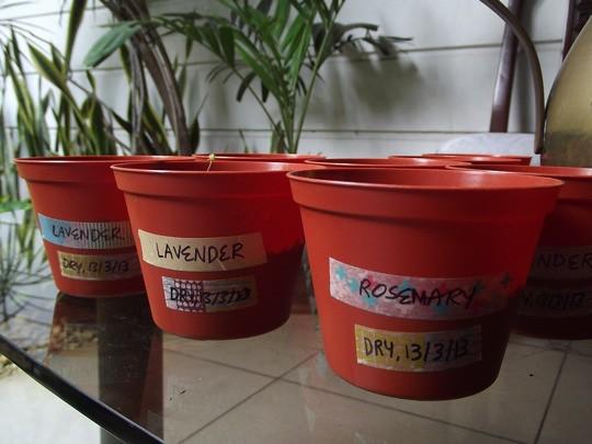 herbs pots