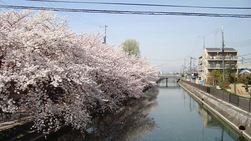 2013/04 深草 琵琶湖疏水 #02